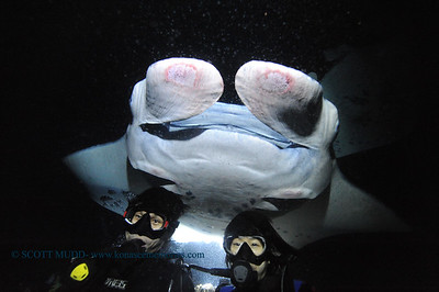 divers manta keauhou2 020116mon