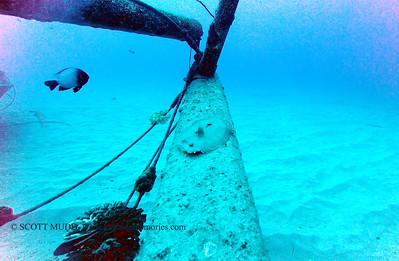flounder2 nakedlady 020116mon