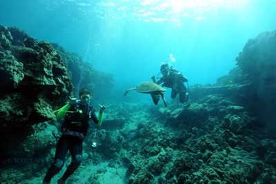 divers turtle turtleheaven2 031516tues