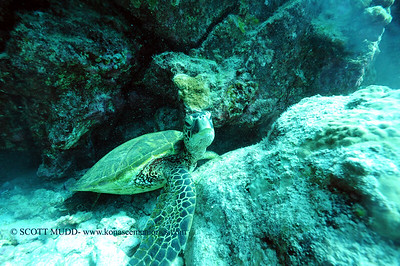 greenseaturtle turtleheaven 031516tues