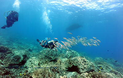 divers naiabay2 050116sun