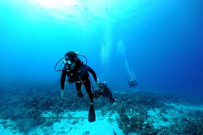 divers turtleheaven 050116sun