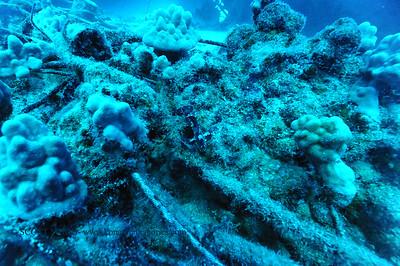 leafscorpionfish nakedlady 050116sun