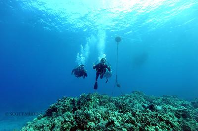 divers turtleheaven2 050116sun