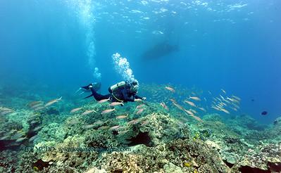 divers naiabay 050116sun