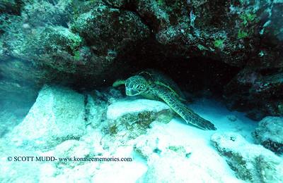 greenseaturtle turtleheaven 050116sun