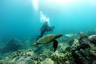 divers turtle3 turtleheaven 061316mon