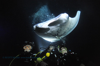 divers manta10 keauhou 060716tues