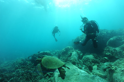 divers turtle10 turtleheaven 061316mon