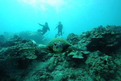 divers turtle7 turtleheaven 061316mon