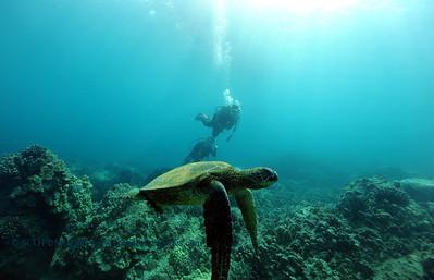 divers turtle4 turtleheaven 061316mon