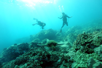 divers turtle9 turtleheaven 061316mon