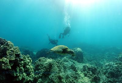 divers turtle5 turtleheaven 061316mon