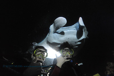 divers manta7 keauhou 060716tues