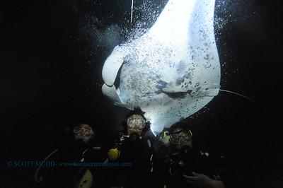 divers manta14 keauhou 060716tues