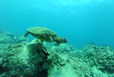 greenseaturtle turtleheaven 061316mon