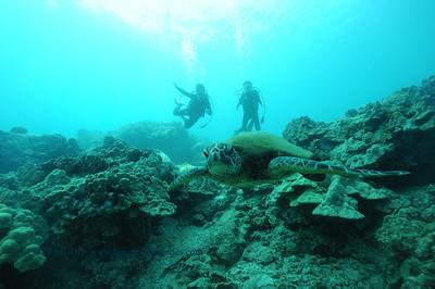 divers turtle8 turtleheaven 061316mon