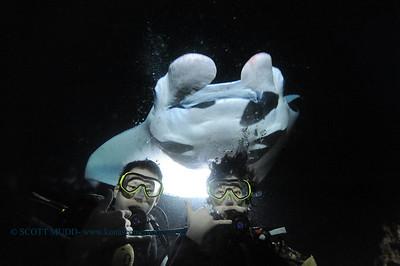 divers manta3 keauhou 060716tues