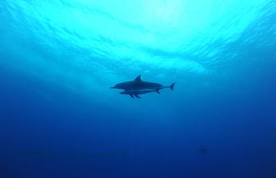 spinnerdolphins naiabay 070316sun