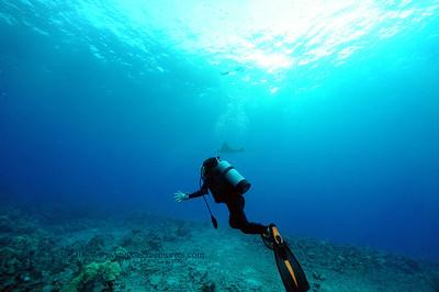 diver manta3 keauhou 070716thurs