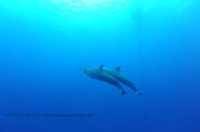 spinnerdolphins greencan naiabay 070316sun