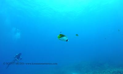 threadfinbutterflyfish naiabay 080316wed