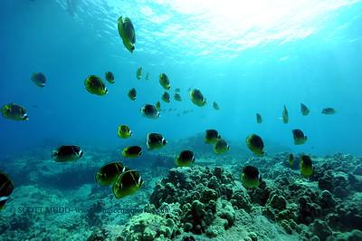 raccoonbutterflyfish turtleheaven 080316wed