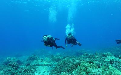 divers3 turtleheaven 080216tues
