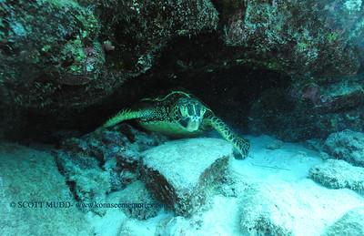 greenseaturtle turtleheaven 080116mon