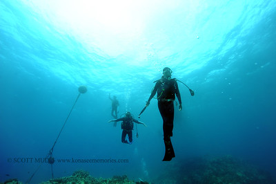 divers turtleheaven 080116mon