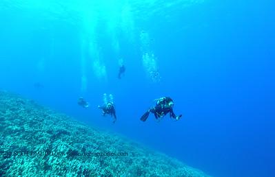 divers2 theshute 080416thurs