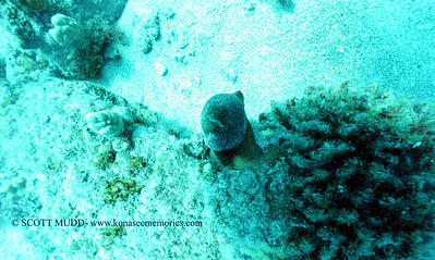 whitemouthmoray naiabay 080316wed