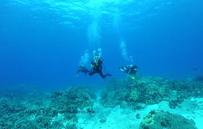 divers turtleheaven 080216tues