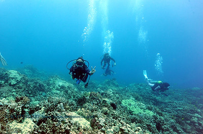 divers naiabay 080116mon