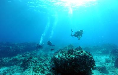divers2 turtleheaven 080216tues