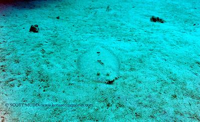 flounder nakedlady2 090116thurs