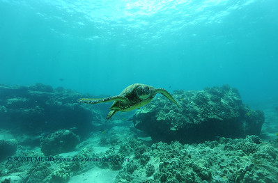 greenseaturtle6 turtleheaven 060516sun
