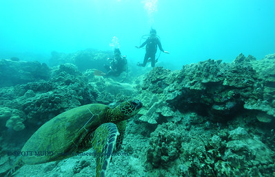 divers turtle6 turtleheaven 061316mon