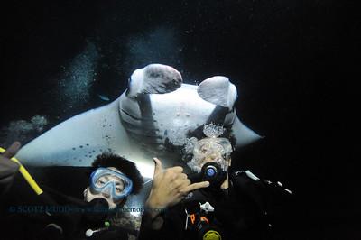 divers manta keauhou8 010417wed