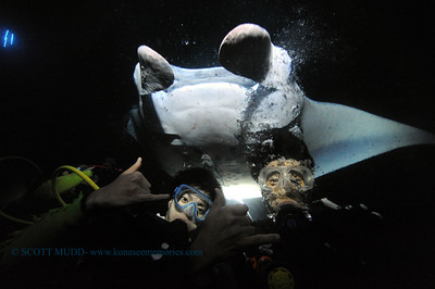 divers manta keauhou4 010417wed