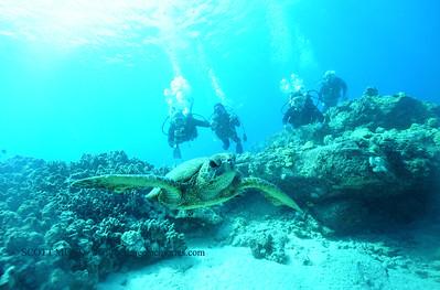 divers turtle turtleheaven4 100917mon