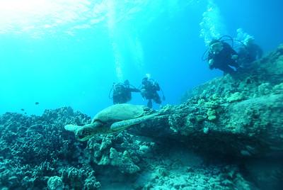 divers turtle turtleheaven7 100917mon