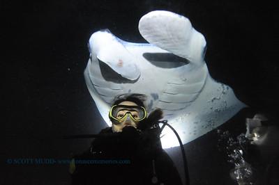 divers manta keauhou21 100517thurs
