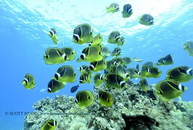 raccoonbutterflyfish turtleheaven4 112917wed