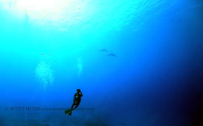 divers dolphins naiabay 110317fri