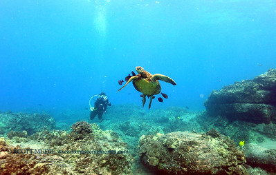 diver turtleheaven4 110217thurs
