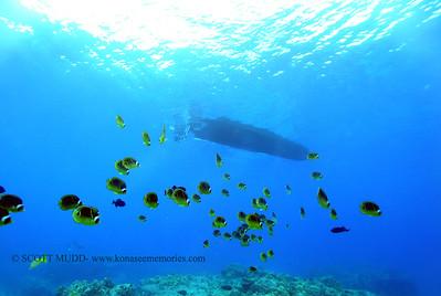 raccoonbutterflyfish turtleheaven2 112617 sun