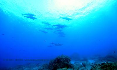 spinnerdolphins naiabay3 112517sat