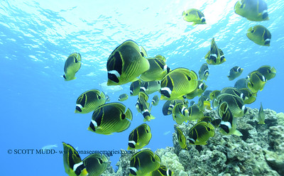 raccoonbutterflyfish turtleheaven3 112917wed