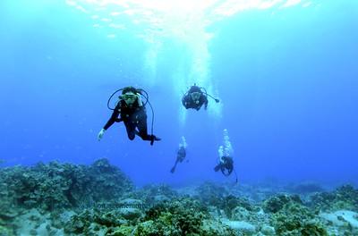divers turtleheaven7 112717tues